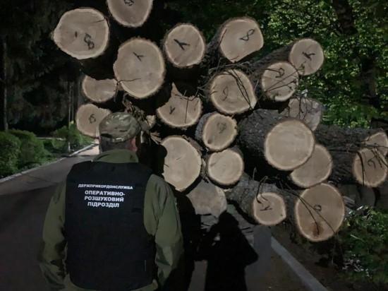 На Житомирщині жителі Рівненщини крали ліс
